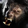 thewolfman-112108